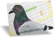 آلگوریتم ۲۰۱۴ سئوی گوگل: کبوتر!